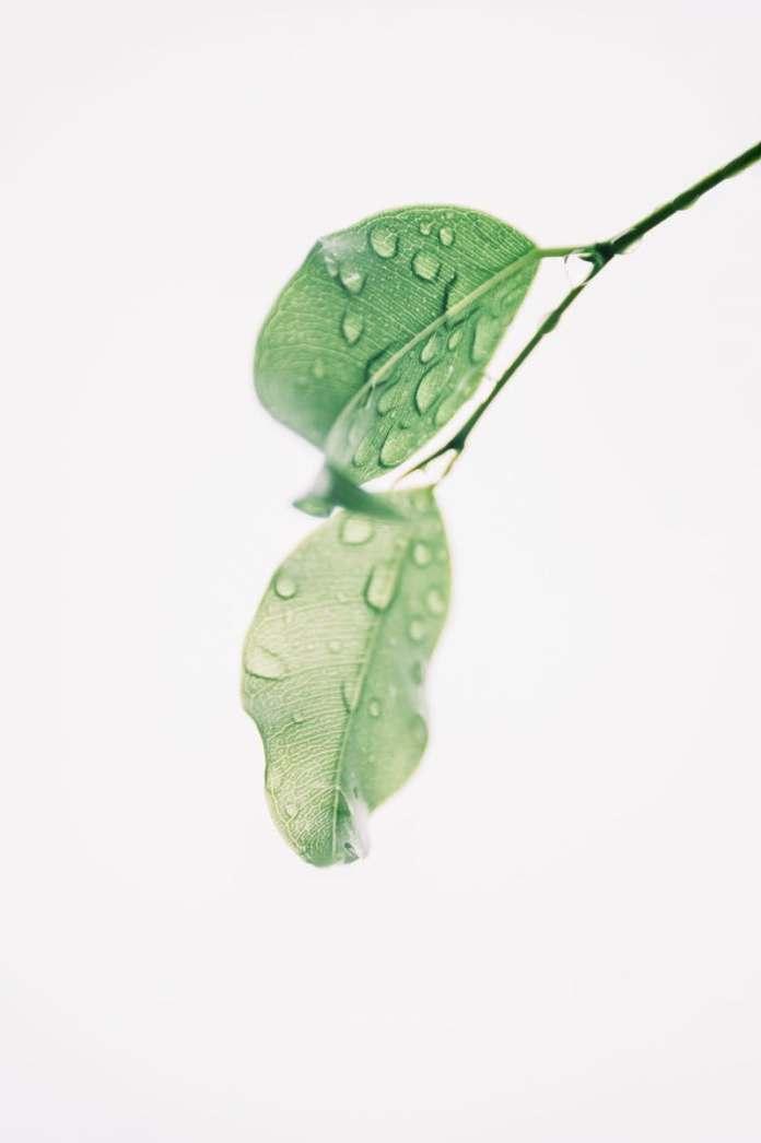 cliomakeup-clean-beauty-11-green