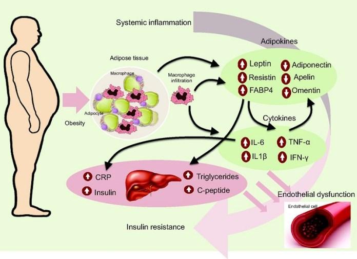 cliomakeup-circonferenza-vita-9-waist-circumfernce-inflammation