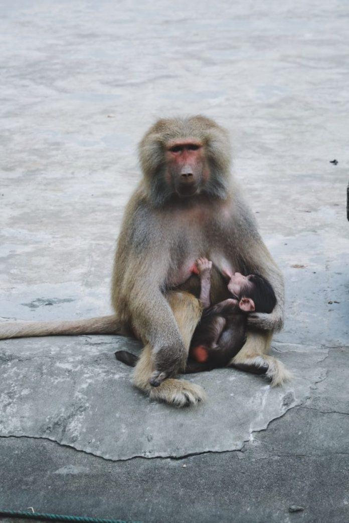 cliomakeup-depressione-post-allattamento-5-scimmie