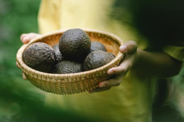 cliomakeup-avocado-hass