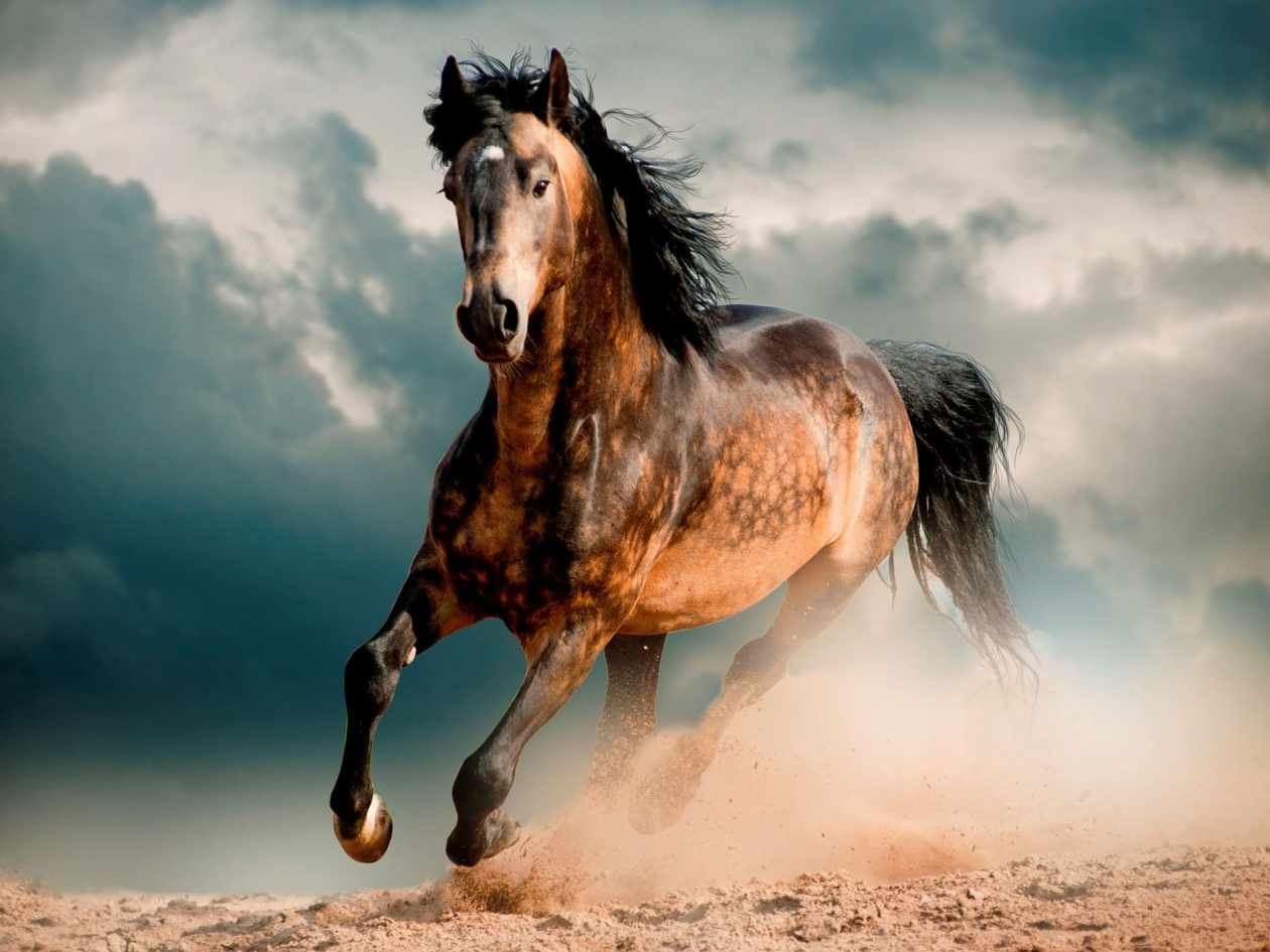The Mustang Horse