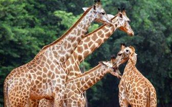 Principais zoológicos do Brasil