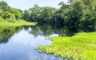 Pantanal Mato-grossense: um ótimo lugar para sua pescaria
