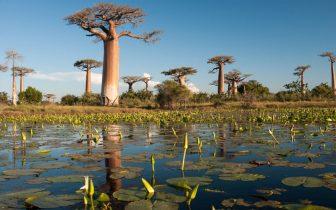 Cinco motivos para visitar Madagascar, a Ilha Continente