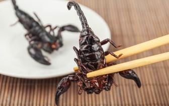 Gastronomia exótica: Conheça os pratos mais esquisitos do mundo