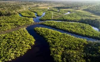 Precisa de motivos para conhecer o Amazonas?