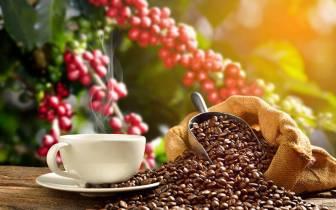 Faça um lindo passeio pela Rota do Café