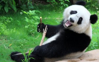 Dez zoológicos virtuais para aproveitar o tempo em família