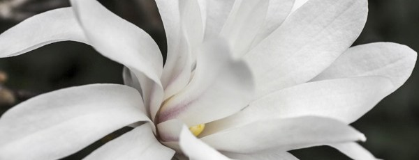 2013 Bloom