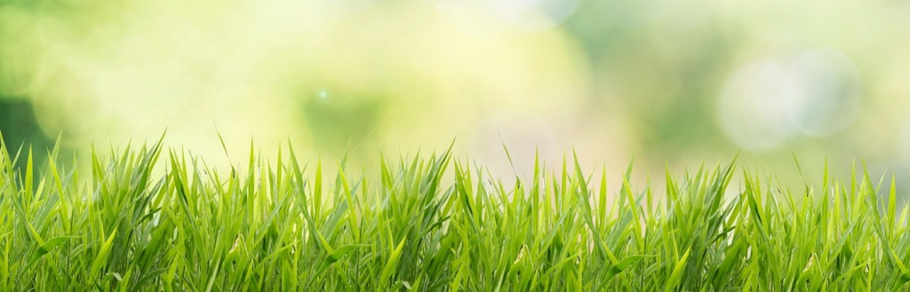 Smart Home Tech for a Lush Lawn and Lean Water Bill