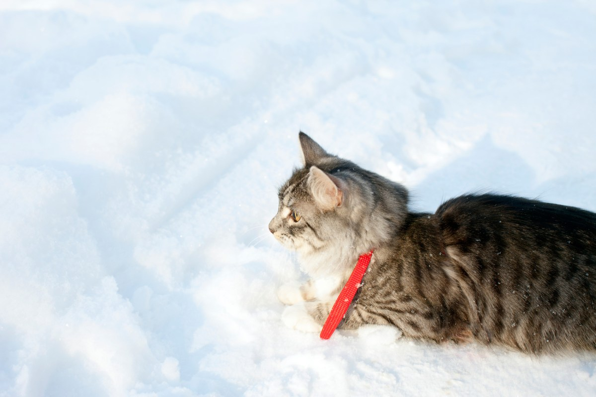 cat laying on snow