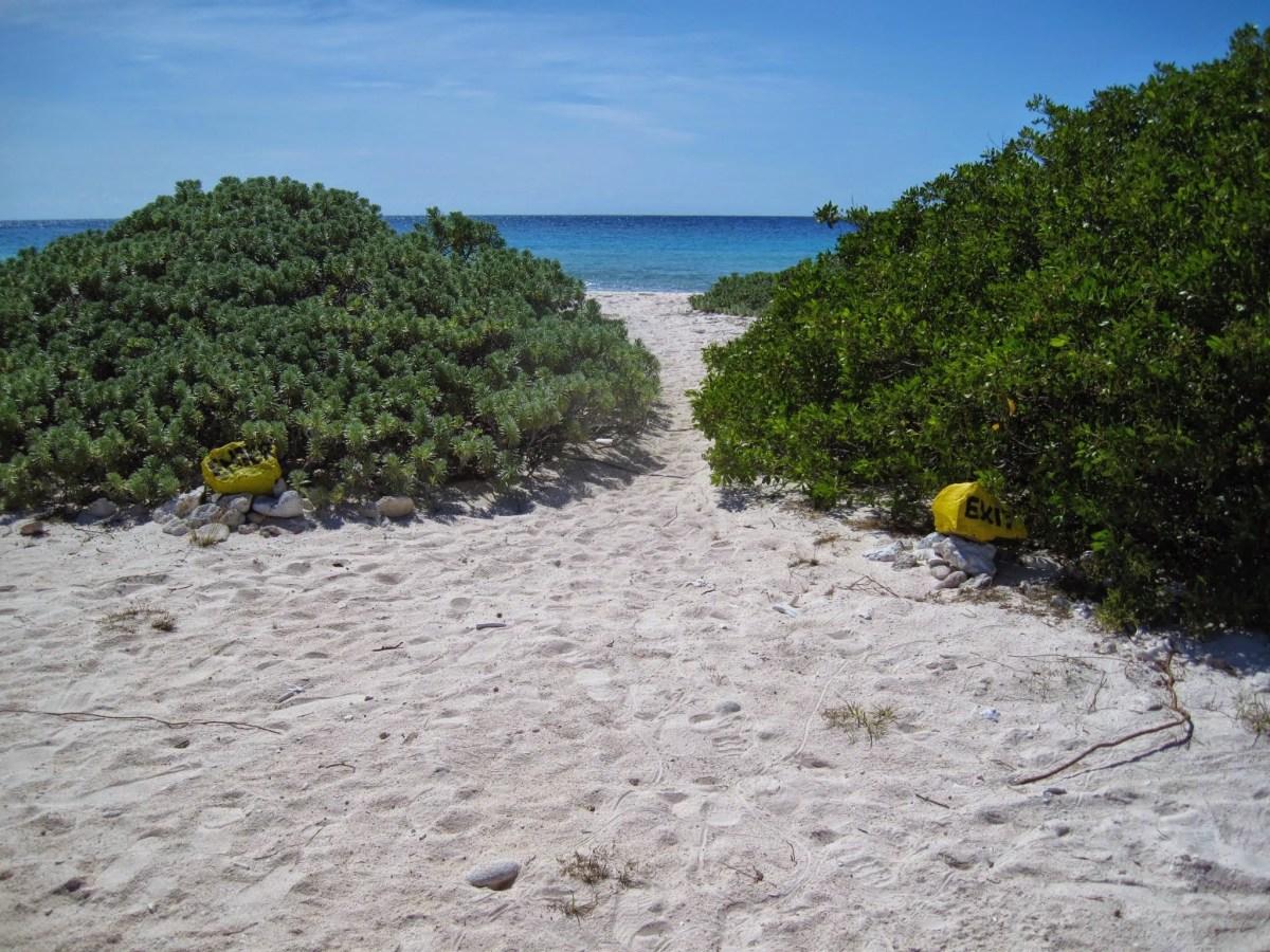 shorediving-markers