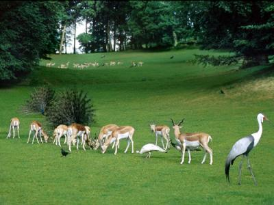 zoo de clères
