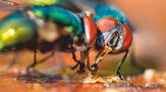 Win schitterende prijzen met je mooiste macrofoto!