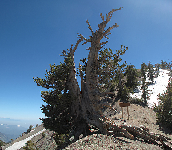 At the junction of the Pacific Crest Trail