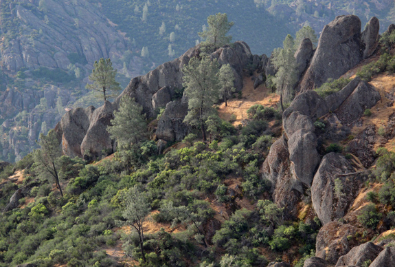 Ghost pine wonderland.