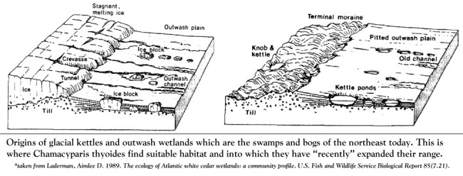How the bogs and swamps of the northeast formed.