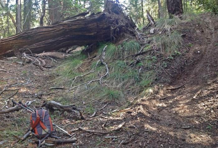 Along the Smokey Creek Trail.