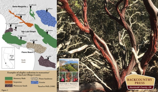 Edaphic speciation of manzanitas in San Luis Obispo County.