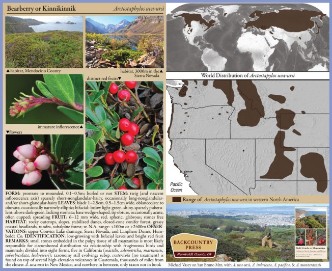 Color plate and range map for Arctostaphylos uva-ursi from Field Guide to Manzanitas.