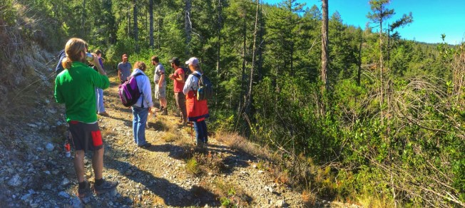 Ahike along the Bigfoot Trail near Redwood National Park offered 5 manzanita and 8 conifer species.