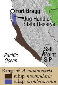 A. nummularia range map
