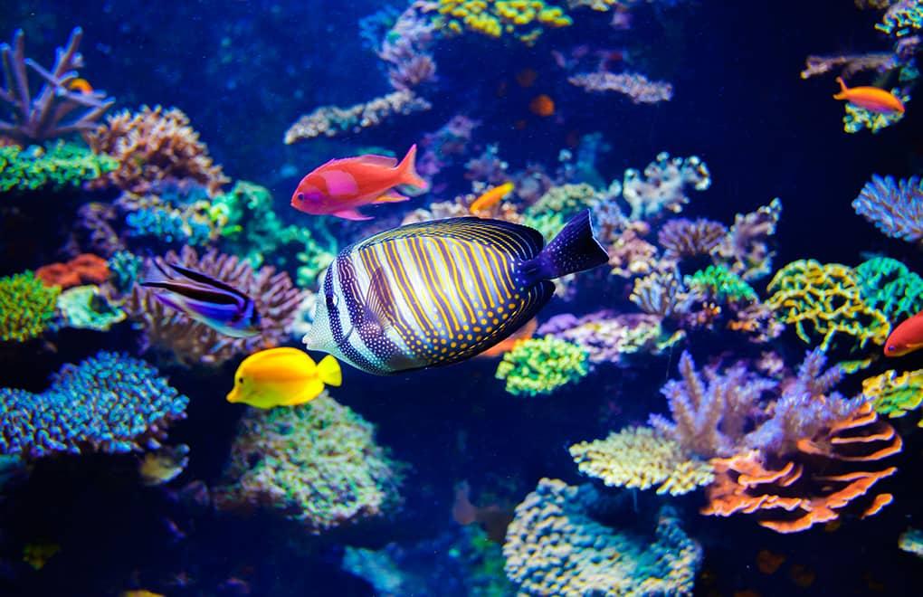 Aquarium Plants List