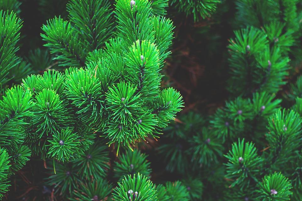 evergreen content - ContentStudio