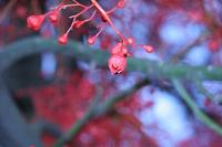 Redtree2_1
