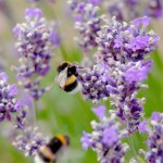 5 Ideas for a Bee Friendly Garden | Cotswold Baby Co