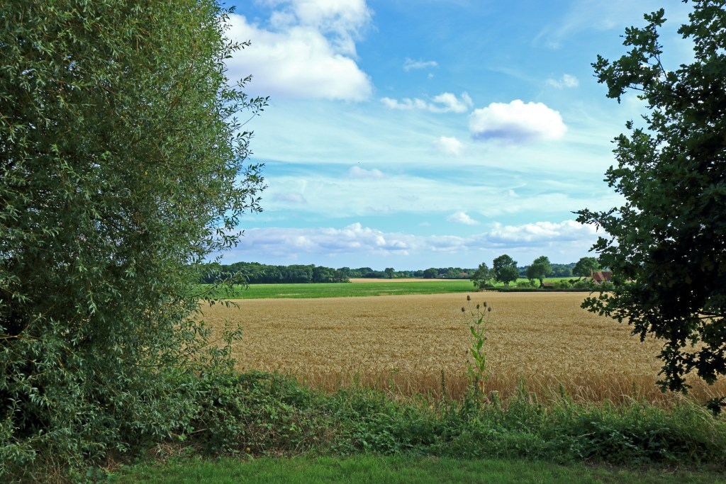 Pluckley countryside in the Kent downs