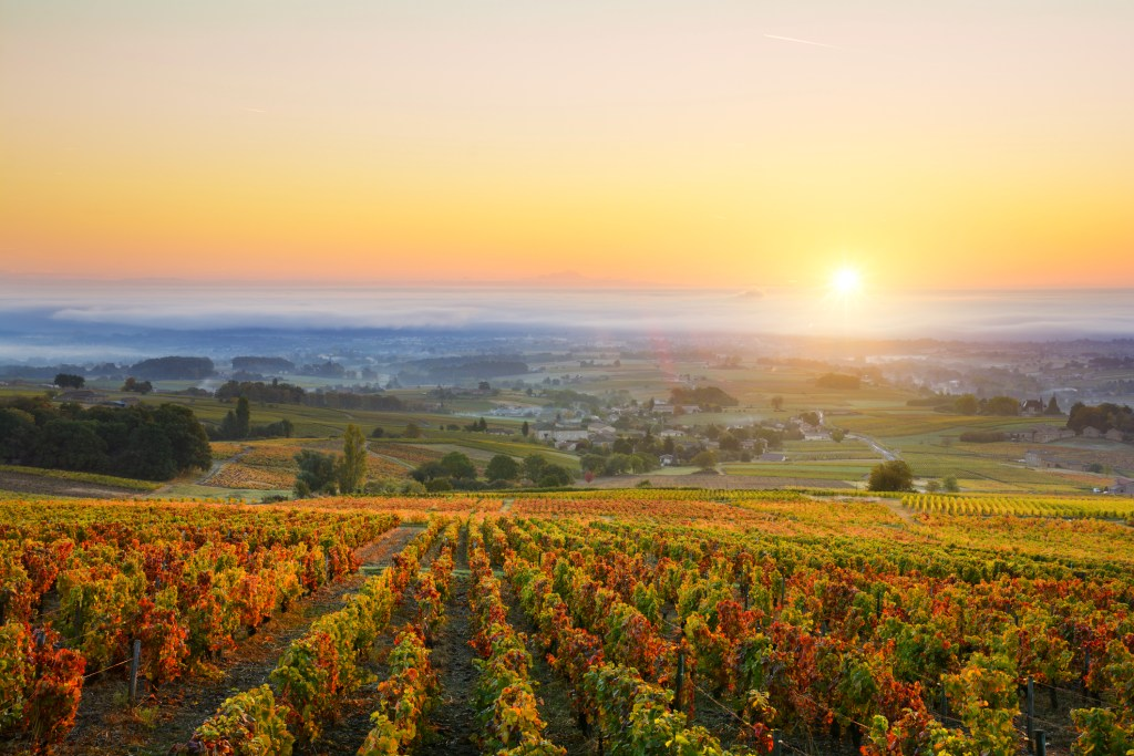 Beaujolais Day autumn events in France