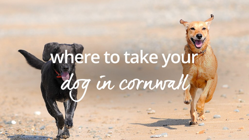 Dog-friendly holidays in Cornwall – where to explore