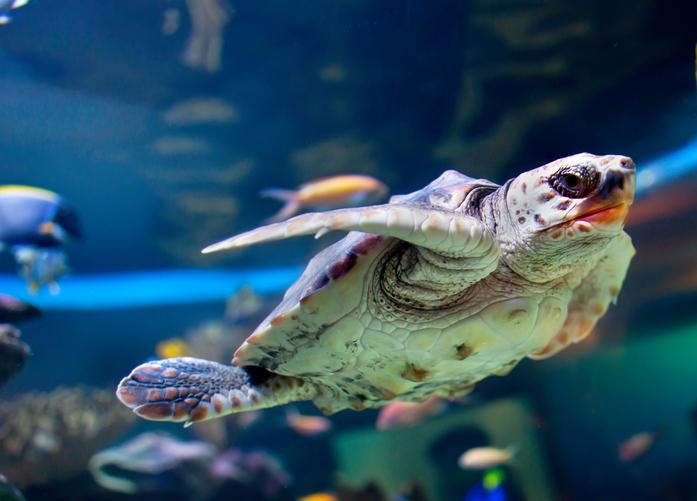 Devon aquarium
