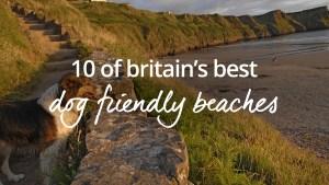 UK's best dog friendly beaches