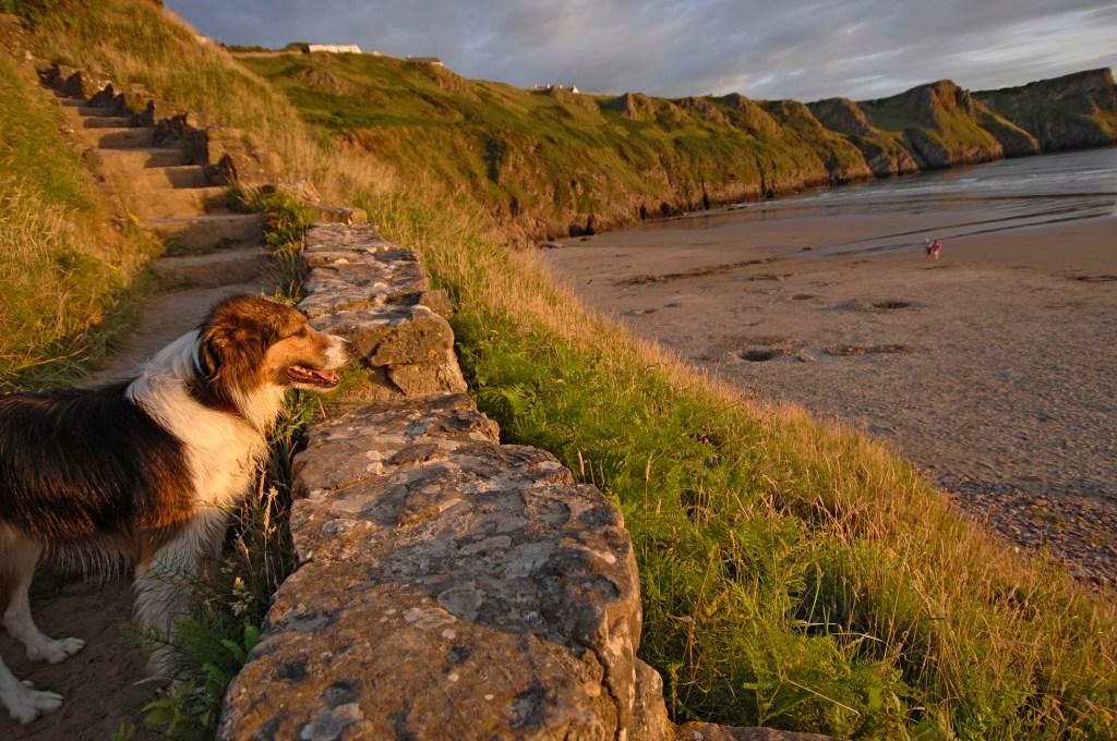 Dog friendly beach Wales