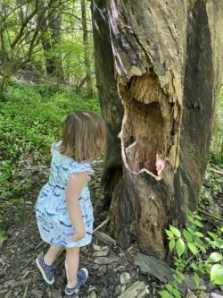Preschooler on a nature walk