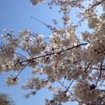 今週はお花見!週記(2012/4/7~2012/4/13)