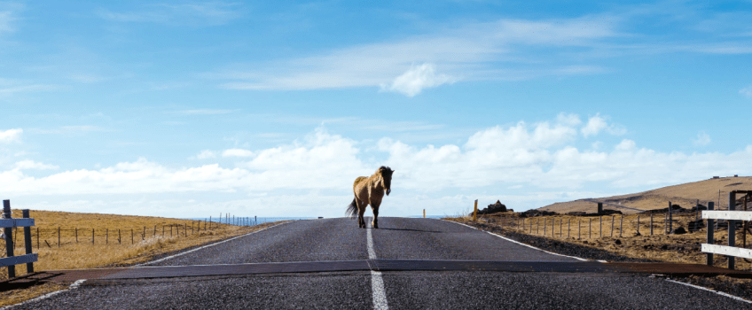 Unsplash Horse amd Road Mahkeo