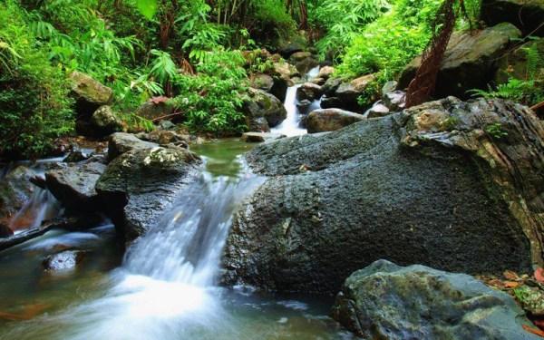Bosque Yunque, Puerto Rico
