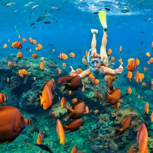Snorkel the coral reef among the colorful tropical fish on Hawaii vacations