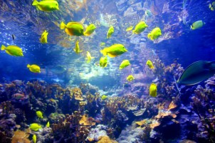 Vibrant fish in the Maui coral reef system