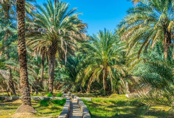 Spend moments of solitude at Al Ain Oasis