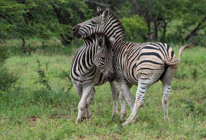 Hluhluwe-iMfolozi Game Reserve
