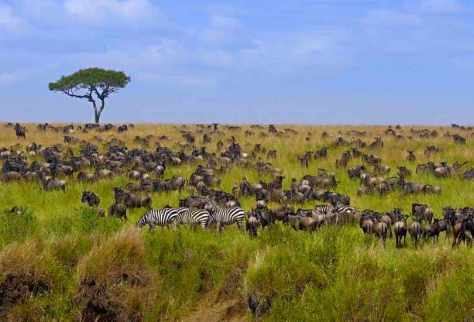 Masai Mara National Reserve, Tanzania