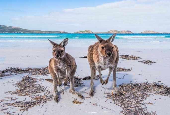 Find Rare Wildlife at Kangaroo Island