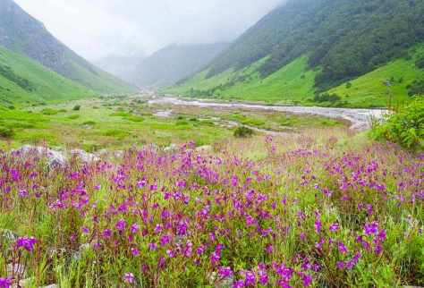Valley of Flowers, Uttarakhand