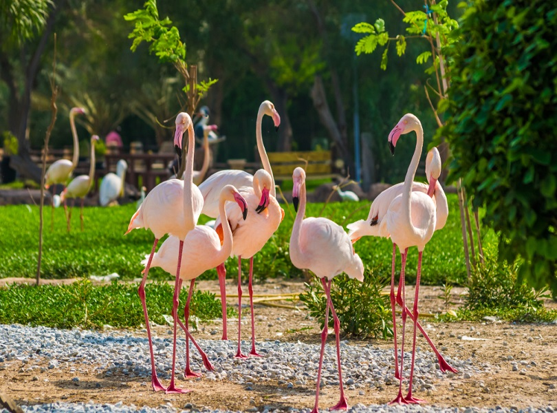 Al Areen Wildlife Park, Sakhir