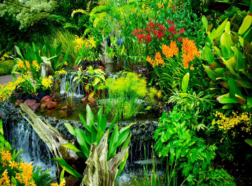 BREATHE FRESH AT NATIONAL ORCHID GARDEN