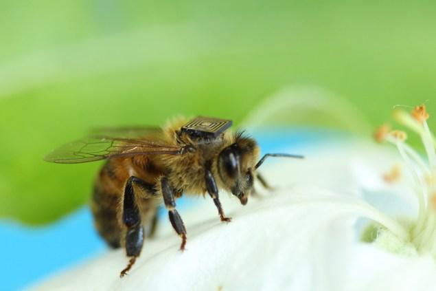 Bee with sensor